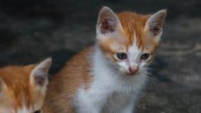 逗人喜爱的棕色小猫 免版税库存照片