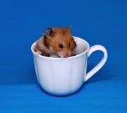 逗人喜爱的棕色仓鼠在一个白色瓷杯子惊吓了 图库摄影