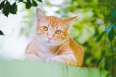 逗人喜爱的橙色猫在庭院里 免版税库存照片
