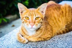 逗人喜爱的橙色街道猫 免版税库存图片
