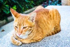 逗人喜爱的橙色街道猫 库存照片