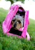 逗人喜爱的歌剧女主角狗粉红色 库存图片