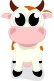 逗人喜爱的母牛身分 库存图片