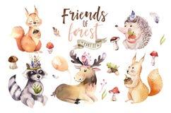 逗人喜爱的水彩漂泊婴孩动画片猬、灰鼠和麋动物nursary的,森林地隔绝了森林 库存照片