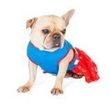 逗人喜爱的法国牛头犬超级英雄 图库摄影