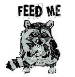 逗人喜爱的浣熊饥饿的动物 免版税库存图片