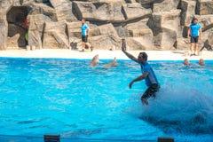 逗人喜爱的海豚在讲话中在dolphinarium,巴统, Geo 免版税库存图片