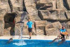 逗人喜爱的海豚在讲话中在dolphinarium,巴统, Geo 库存照片