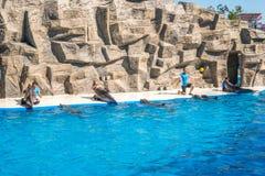 逗人喜爱的海豚在讲话中在dolphinarium,巴统, Geo 图库摄影