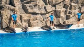 逗人喜爱的海豚在讲话中在dolphinarium,巴统, Geo 免版税库存照片