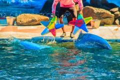 逗人喜爱的海豚打球,并且跳舞在游泳的p显示 免版税图库摄影