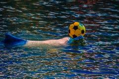逗人喜爱的海豚打球,并且跳舞在游泳的p显示 库存图片