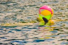逗人喜爱的海豚打球,并且跳舞在游泳的p显示 免版税库存图片