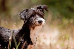 逗人喜爱的混杂的品种小狗 免版税库存照片