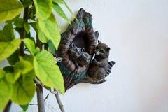 逗人喜爱的滑稽的浣熊 在墙壁上的装饰以浣熊的形式 库存照片