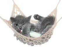 逗人喜爱的灰色小猫吮在吊床的牛奶瓶 免版税图库摄影