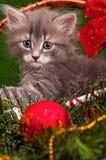 逗人喜爱的灰色小猫 库存照片
