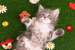 逗人喜爱的灰色小猫 免版税库存图片