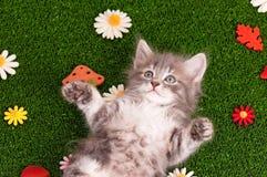 逗人喜爱的灰色小猫 库存图片