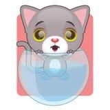 逗人喜爱的灰色猫在鱼碗黏附了 免版税库存照片