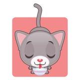 逗人喜爱的灰色猫饮用奶 库存图片