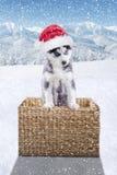 逗人喜爱的爱斯基摩戴圣诞老人帽子 库存照片