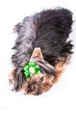 逗人喜爱的爱犬   免版税库存照片