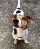 逗人喜爱的狗一点 图库摄影