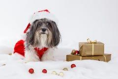 逗人喜爱的狗佩带的圣诞节礼服和圣诞老人帽子 免版税库存图片