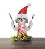 去逗人喜爱的狗吃欢乐圣诞节鸭子 免版税图库摄影