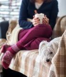 逗人喜爱的狗和妇女圣诞节的装饰了得在家 库存图片