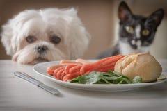 逗人喜爱的狗和猫请求食物 免版税库存图片