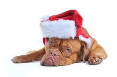 逗人喜爱的狗圣诞老人 免版税库存图片