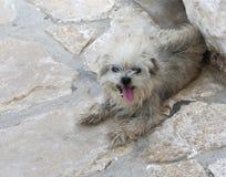 逗人喜爱的狗在卡斯特龙岛海岛 免版税库存图片