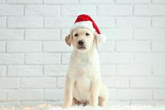 逗人喜爱的狗在圣诞老人帽子坐地板 免版税库存图片