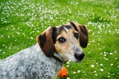 逗人喜爱的狗在庭院里 免版税库存照片