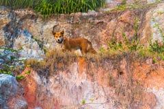 逗人喜爱的狗在热带环境里 免版税库存图片