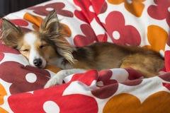逗人喜爱的狗在辎重袋放松 免版税图库摄影