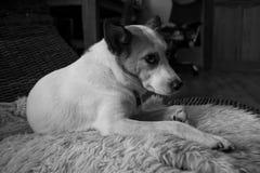 逗人喜爱的狗坐一把柳条摇椅 免版税图库摄影
