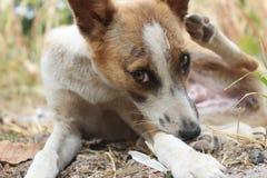 逗人喜爱的狗宠物 免版税库存照片