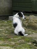 逗人喜爱的狗开会,回顾在肩膀 库存图片