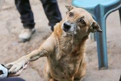 逗人喜爱的狗想要食物 免版税库存图片