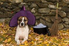 逗人喜爱的狗服装 免版税库存照片