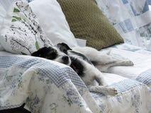逗人喜爱的狗熟睡在长沙发在自然阳光下 库存照片