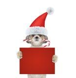 逗人喜爱的狗用拿着与空间的圣诞节糖果一张卡片文本的 免版税库存照片