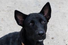 逗人喜爱的狗的黑颜色 免版税图库摄影