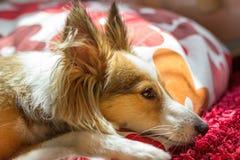 逗人喜爱的狗看起来沮丧 免版税库存图片