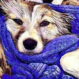 逗人喜爱的狗表示 免版税库存照片