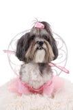 逗人喜爱的狗装饰了象一位神仙为万圣夜 库存图片