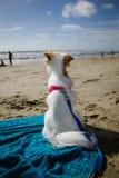 逗人喜爱的狗观看海洋 免版税库存图片